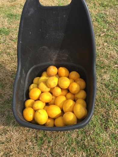 bucket-o-lemons