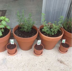 First Herb Pot Garden